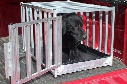 Great Day Road Dog Travel Kennel - Aluminum Truck Bed Dog Kennels